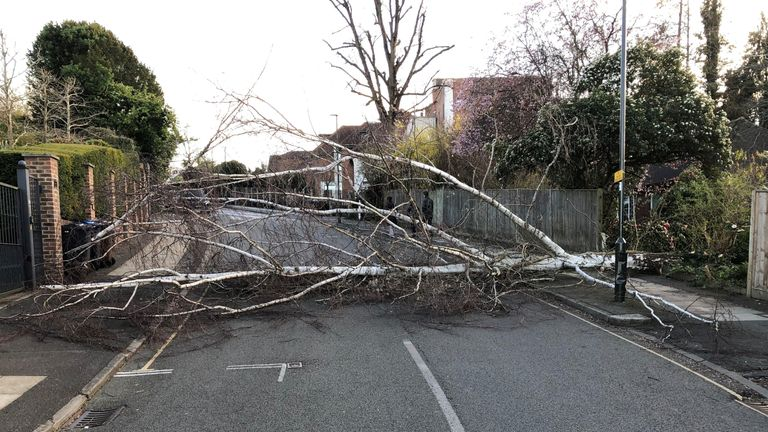 Fallen tree in Wimbledon, London