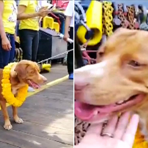 Dog rescued after being spotted swimming 135 miles off Thailand coast by oil rig workers