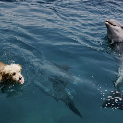 Animal espionage: Defecting dolphins and crafty canines