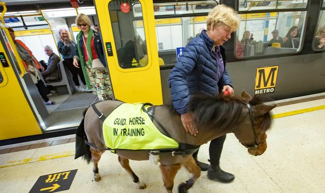 UK's first guide horse prepares for London job by taking the Metro