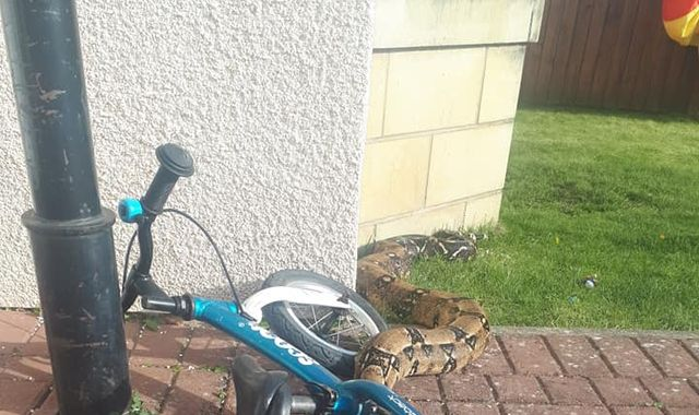 Kids find 7ft boa constrictor on their doorstep in Scotland
