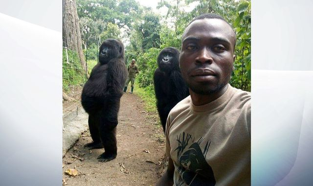 Gorillas pose for striking selfie with park ranger in the Democratic Republic of Congo