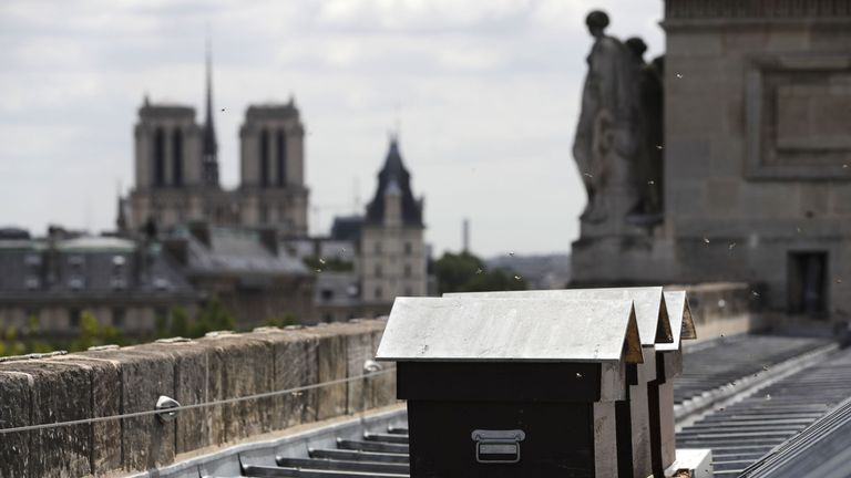 Rooftop beehives can be seen across Paris, and are part of an initiative to increase population numbers