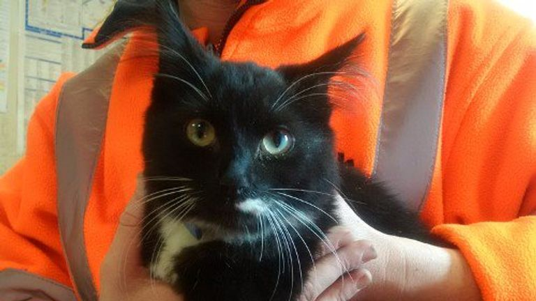 Tux jumped from a condemned sofa at a Slough waste plant. Pic: Slough Borough Council