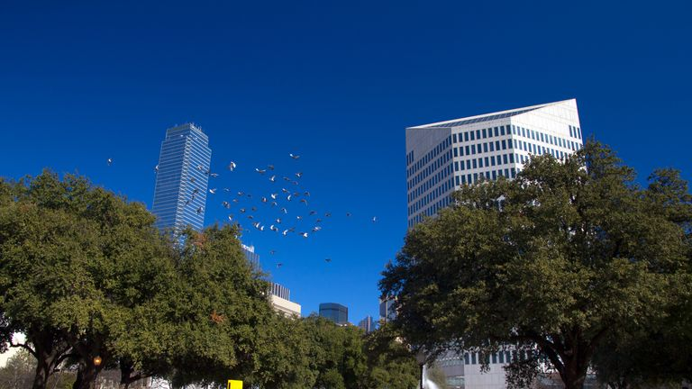 Dallas in Texas boasts plenty of skyscrapers that can pose challenging obstacles for migrating birds