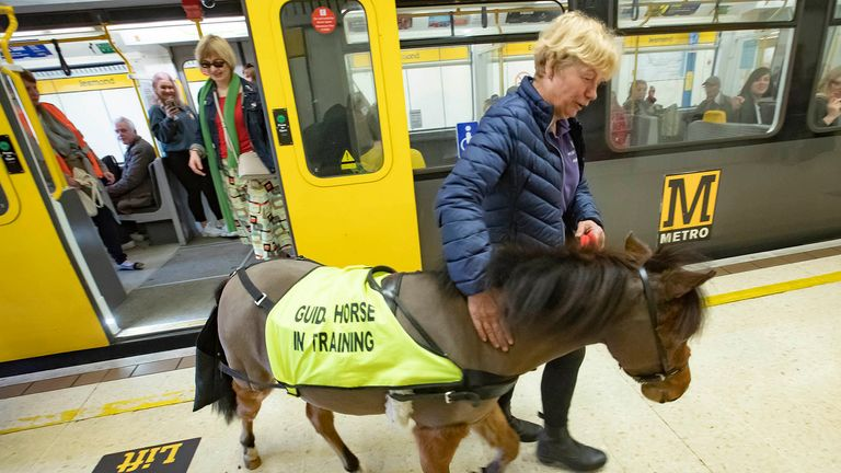 Digby, Britain's first ever guide horse during a special training day on Tyne and Wear Metro