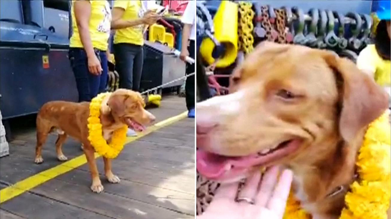 Social media captured the moment the pooch was brought on board. Pic: Facebook/ Dog Smile House