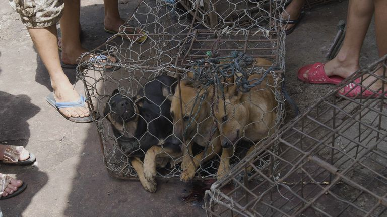Dog Meat-Free Indonesia