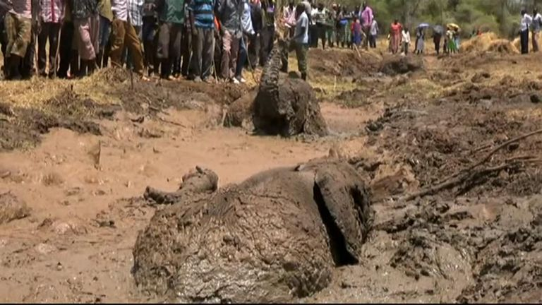 Kenyan rangers free elephants trapped in mud