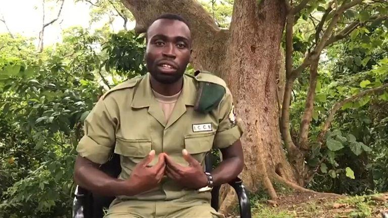 Ranger Mathieu Shamavu said the gorillas were 'at ease'.   Pic: Mathieu Shamavu/Virunga National Park