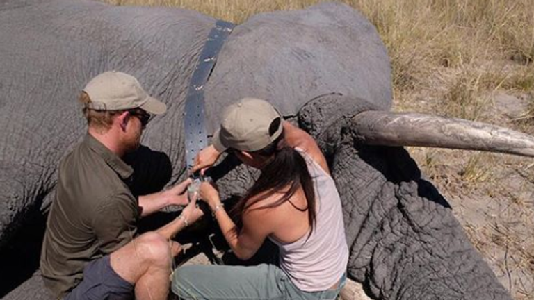 The Duke and Duchess pictured in 2017 equipping an elephant with a satellite collar. Pic: Instagram/@sussexroyal