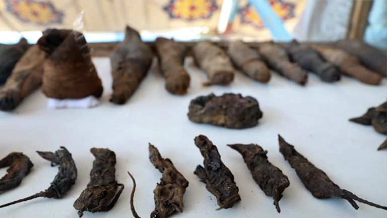 Dozens of mummified mice were among animals found in the tomb