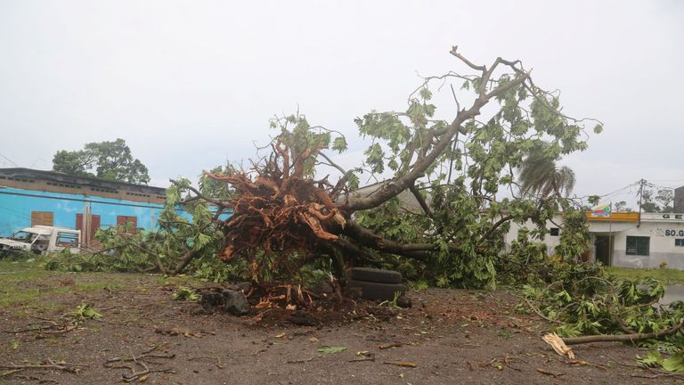 A tree in Moroni felled by Cyclone Kenneth