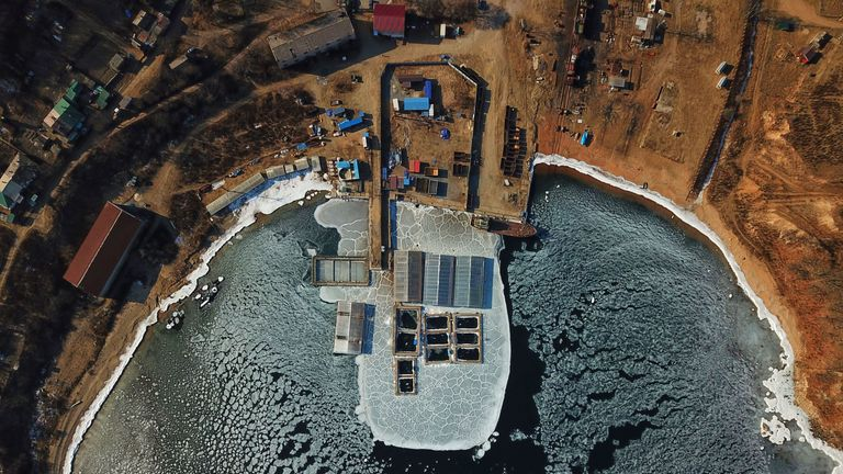 TOPSHOT - In this aerial view taken on January 22, 2019 captured marine mammals are seen in enclosures at a holding facility in Srednyaya Bay in the Far Eastern town of Nakhodka