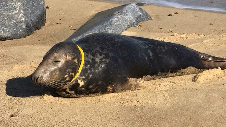 Sir David was found on a Norfolk beach with a frisbee embedded in his neck