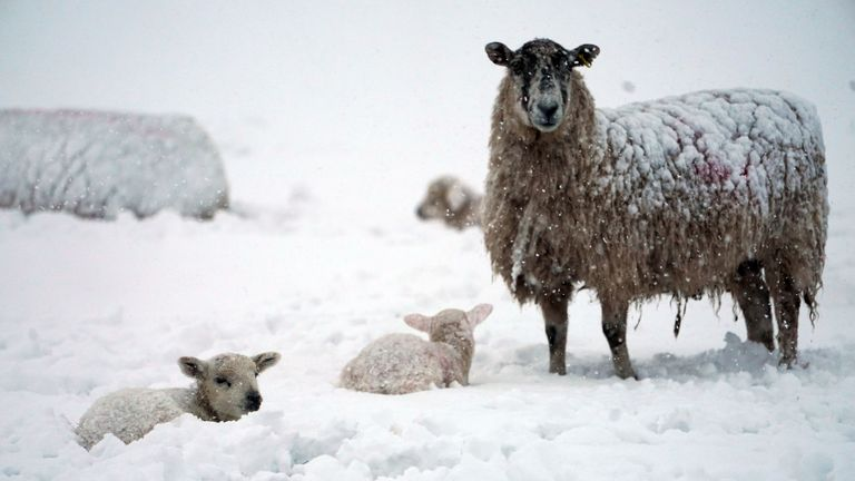 The snow came overnight in the north of England and the Midlands