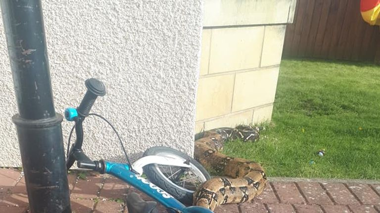 The snake was found outside the front of the house. Pic: Bruce Baker
