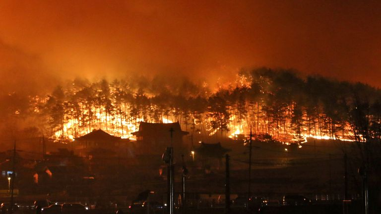 A wildfire in Donghae, South Korea