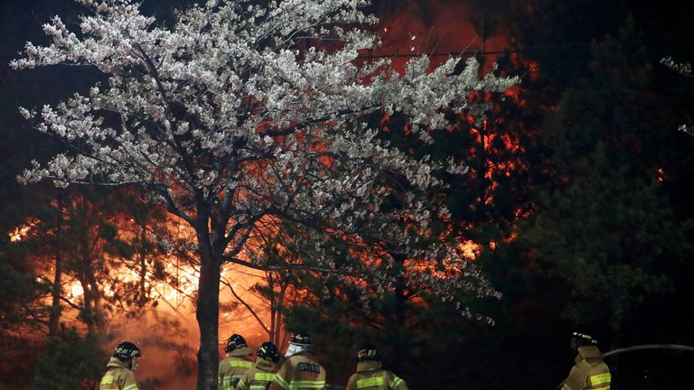 Firefighters work to put out flames during a wildfire in Sokcho, South Korea