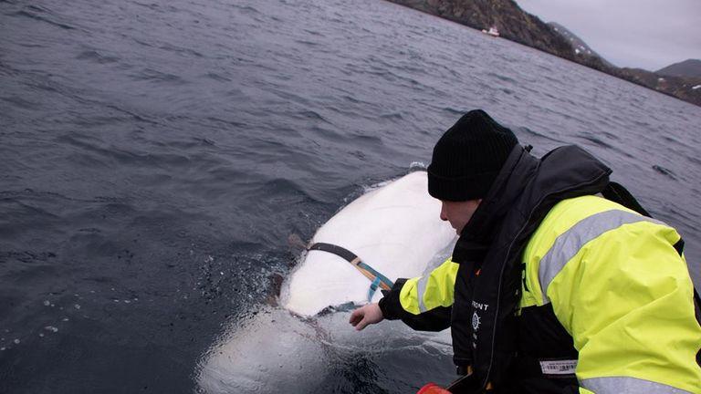Pic: Jørgen Ree Wiig, fiskeridirektoratet