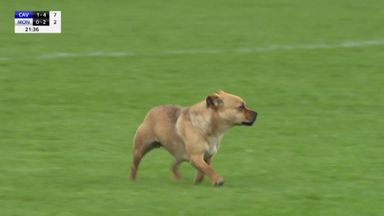 Dog stops play in GAA!