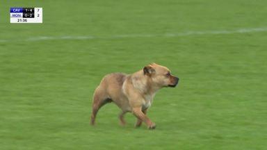 Dog stops play in GAA!
