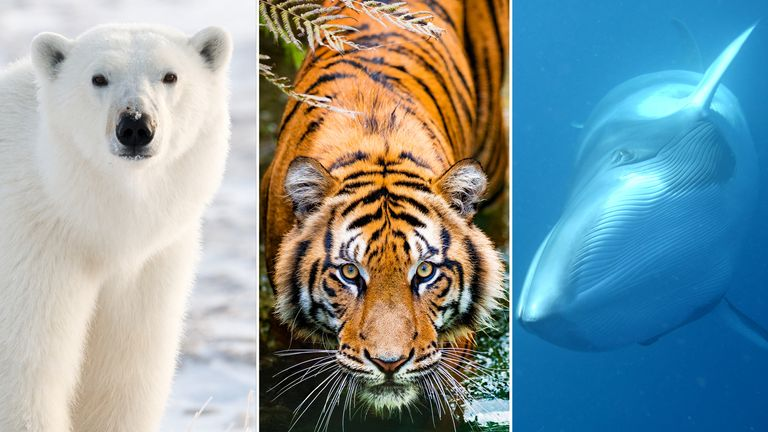 Over a million species of plants and animals are under threat of extinction