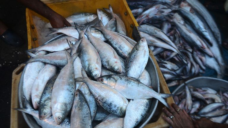 Similar bans have been put in place in the past, but this is the first time it will be extended to all fishing vessels