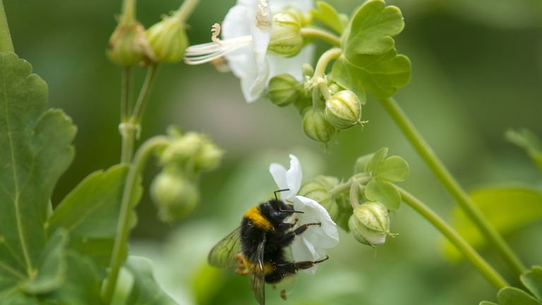 A third of food crops are pollinated by bees and other insects