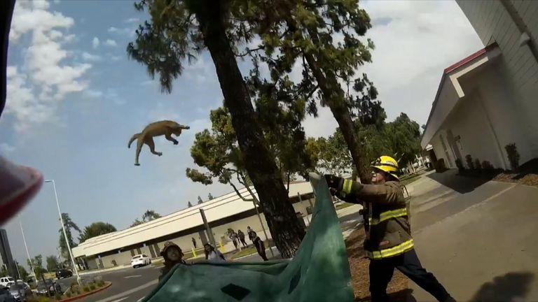 Firefighters catch cat in epic tree fall