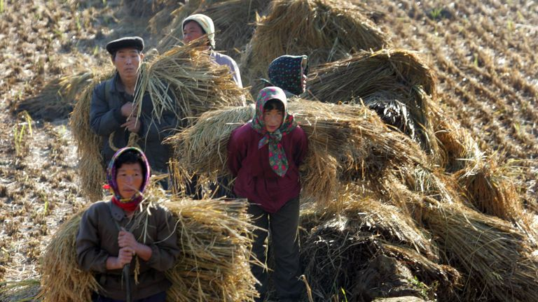 North Koreans work on a rice field during the harvest outside the North Korean capital of Pyongyang October 16, 2005