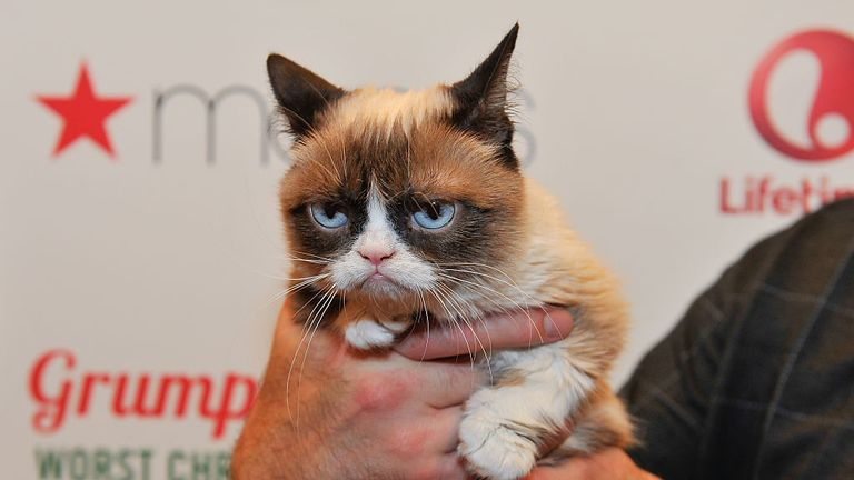 SAN FRANCISCO, CA - NOVEMBER 21: Grumpy Cat appears at Lifetime's Grumpy Cat's Worst Christmas Ever event at Macy's Union Square on November 21, 2014 in San Francisco, California. (Photo by Steve Jennings/Getty Images for Civic Entertainment Group)