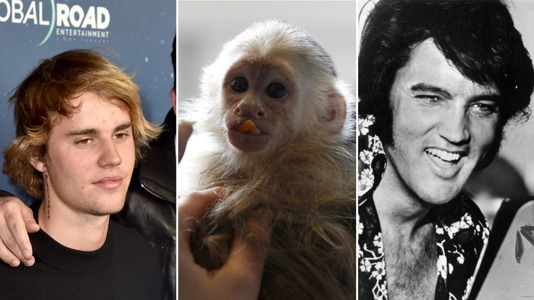 Celebrities could be setting the wrong example by owning monkeys as pets, according to an evolutionary scientist