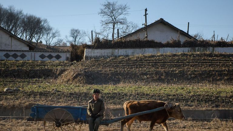 Outdated equipment is one of the problems holding back North Korean agriculture, illustrated by this farmer outside Pyongyang