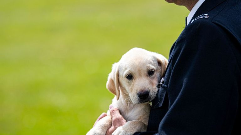 Police dogs begin training at seven-weeks old. Pic: Met Police