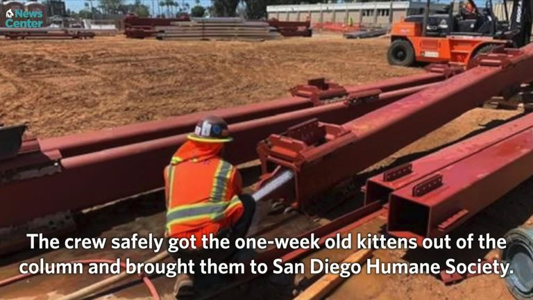 The kittens were inside a steel column. Pic: San Diego Humane Society