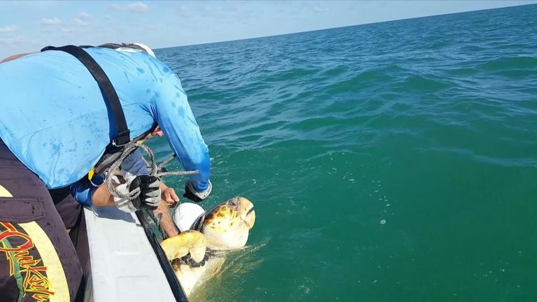 The researchers came across the threatened species of turtle while travelling to conduct research dives.
