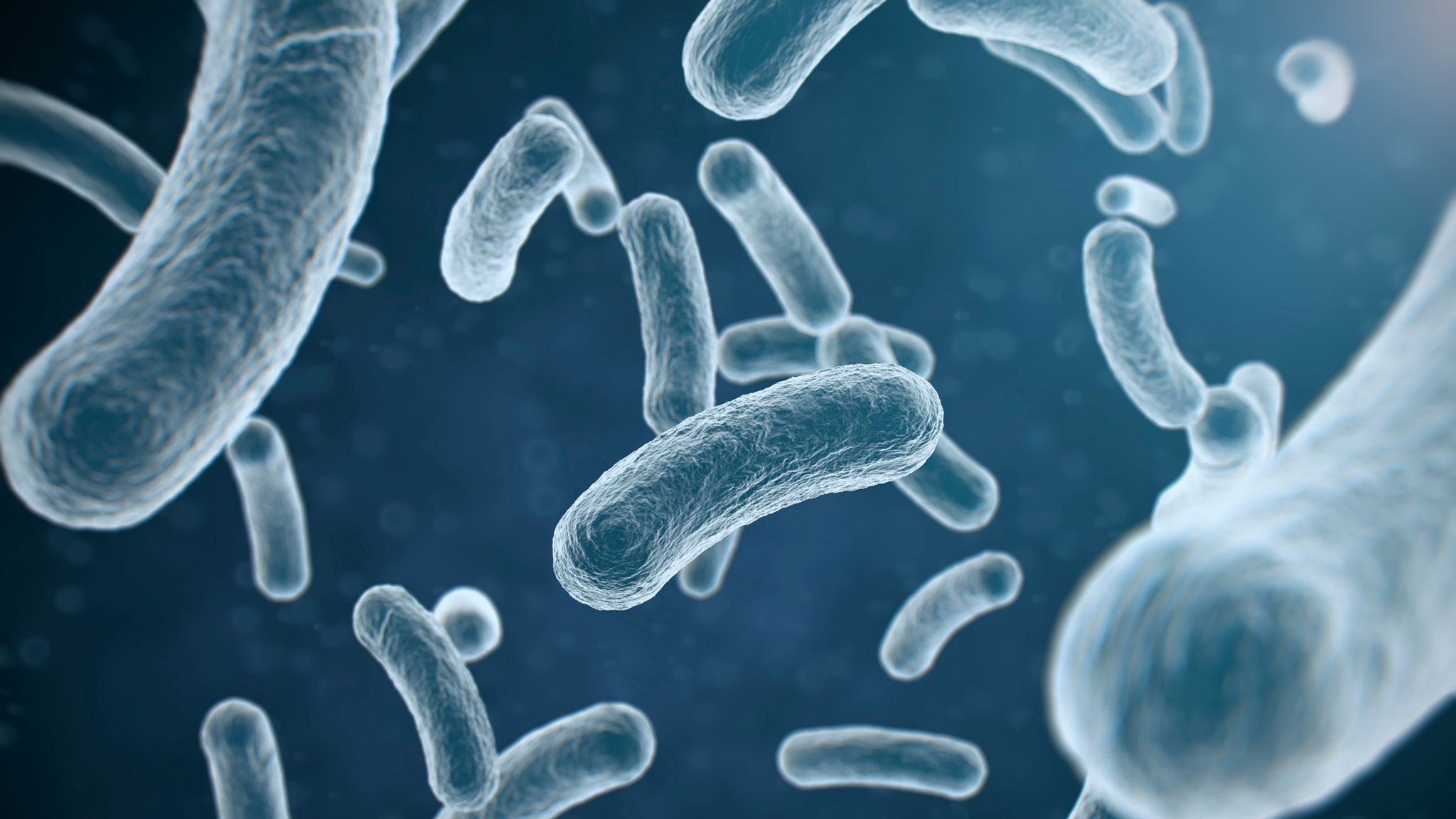 Poor toilet hygiene is bigger E.coli risk than uncooked food - research