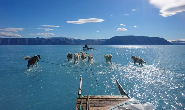 Dramatic photo shows husky dogs walking on water in Greenland