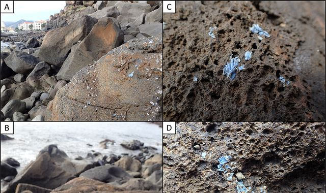 New 'plasticrust' pollution spreading on rocks in Madeira, say scientists