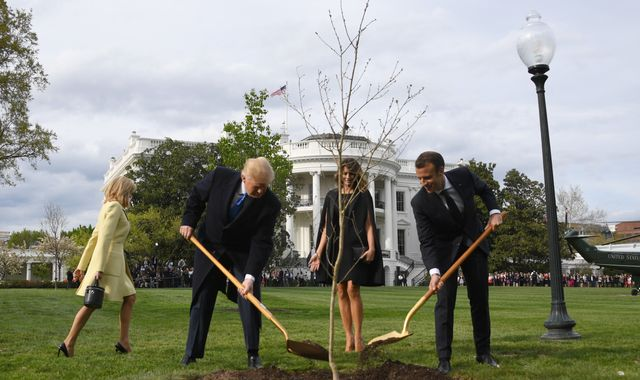 Macron and Trump's 'friendship tree' has died
