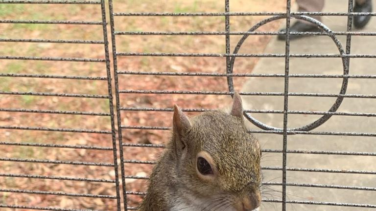 This squirrel was def meth to keep it aggressive. Pic: Limestone County Sheriff's Office