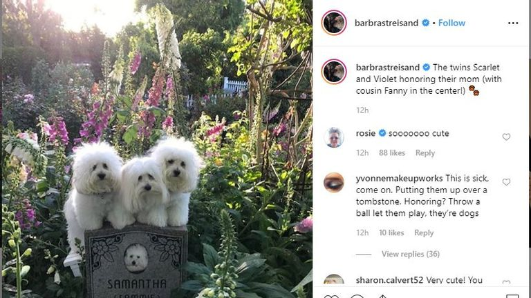 Barbara Streisand posted this picture of her cloned dogs at their 'mom's grave'. Pic: @barbrastreisand/Instagram