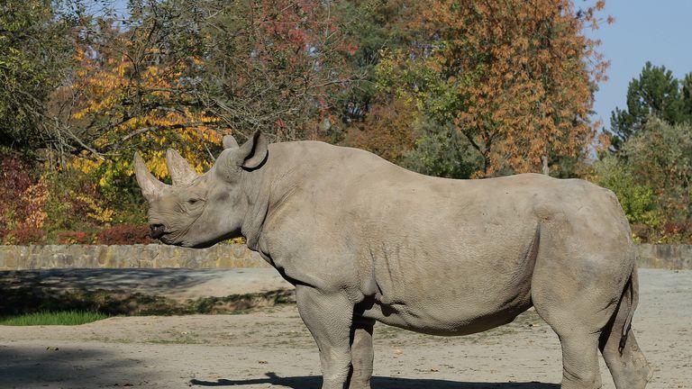 Jasmina was transferred from Safari Park Dvur Kralove. Pic: African Parks