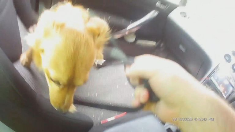 Dog locked in hot car rescued
