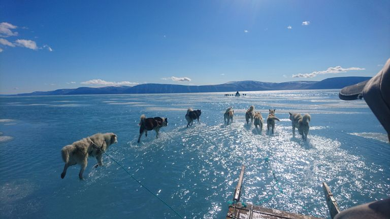 Sled dogs seen with their paws deep in melted ice water in Greenland. Pic: Steffen Malskaer and the Danish Meteorological Institute
