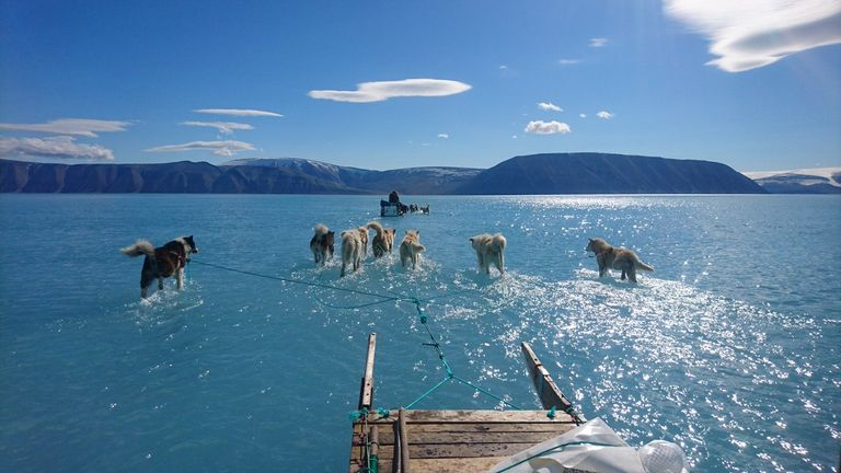 Husky dogs appear to be walking on water in northwest Greenland. Pic: SteffenMalskaer and the Danish Meteorological Institute