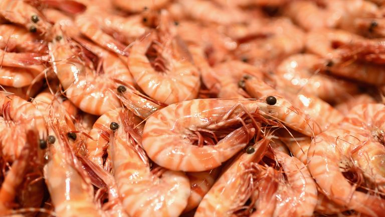 World's first sustainable land-based prawn farm launches in Scotland