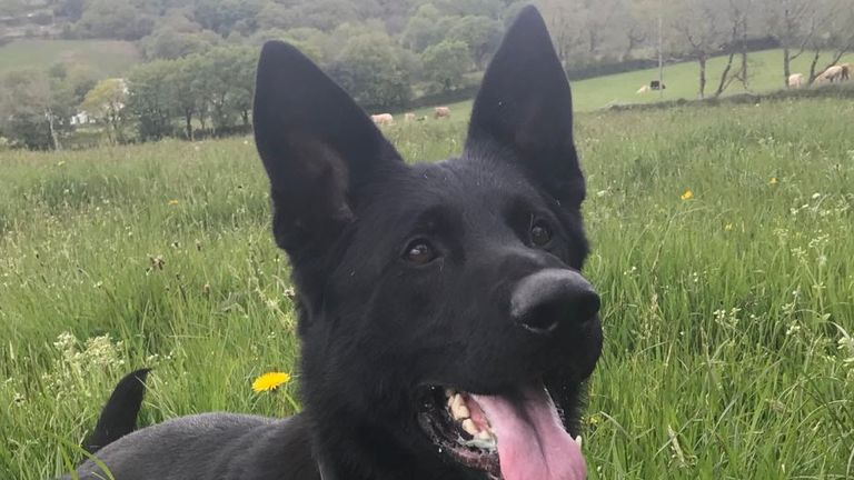 PD Rudi assisted officers in making the arrest