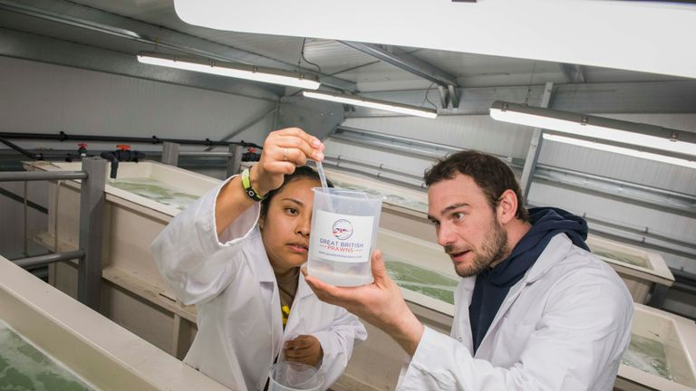 Scientists testing water samples on the site of a new UK prawn farm
